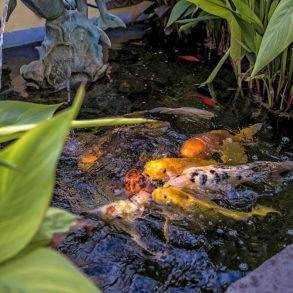 Avalon Hotel - The Koi Pond