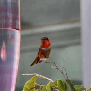 Hummingbird watching feeder